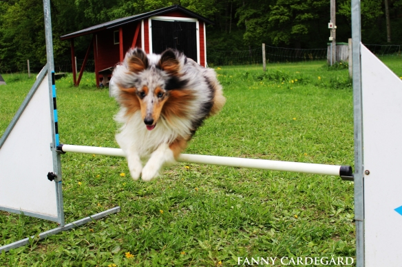 Agility Uppsala hinder